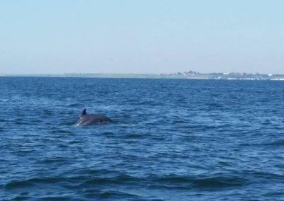 pe urmele delfinilor din Marea Neagra - dreamexplorer.ro 001