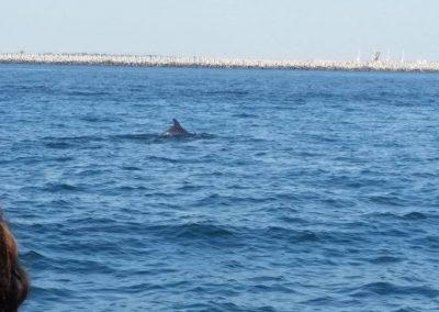 pe urmele delfinilor din Marea Neagra - dreamexplorer.ro 002