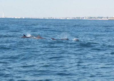 pe urmele delfinilor din Marea Neagra - dreamexplorer.ro 003