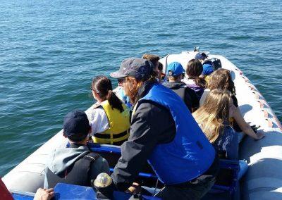 pe urmele delfinilor din Marea Neagra - dreamexplorer.ro 004